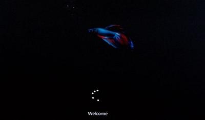 Il pesciolino Betta compare nella schermata di Windows 8 build 7989